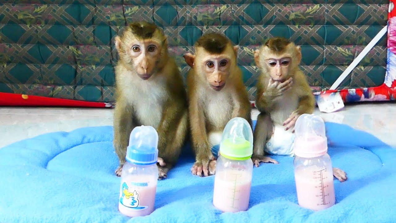 Three Lovable DD Family, Donnal Molly And Zuji 0rganized Sitting Wait Flavor-Milk Treat