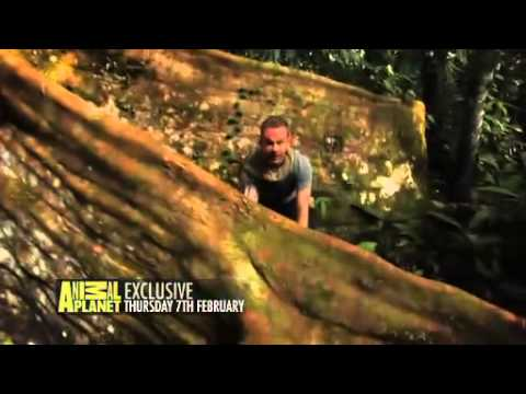 Animal Planet HD Wild Things With Dominic Monaghan 30