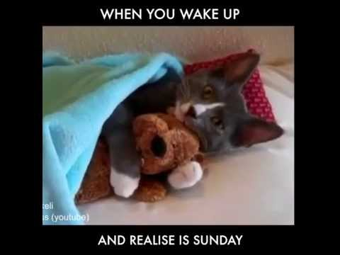 Image result for kitty sunday