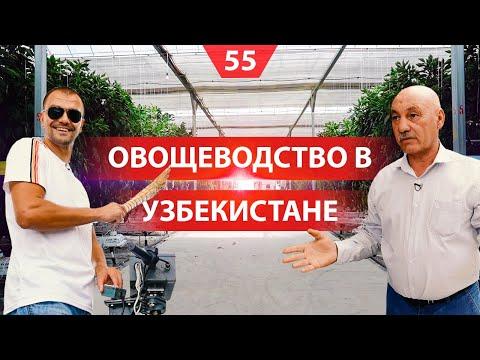 Теплицы в Узбекистане. Выращивание овощей на гидропонике