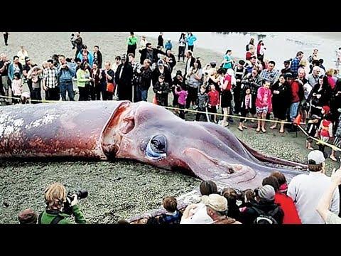 THE BIGGEST SEA ANIMALS