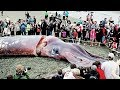 THE BIGGEST SEA ANIMALS