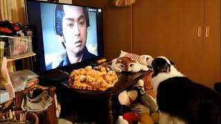 テレビ好きのくーちゃん、久しぶりに水戸黄門を見ました!