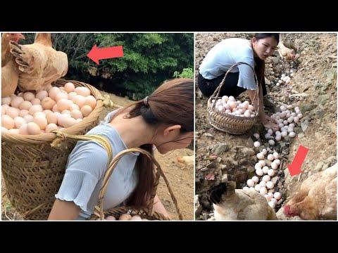 Beautiful woman works hard on her amazing chicken farm | Mr Lee