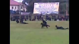 Unit K-9 Pt.vale Indonesia, Sorowako