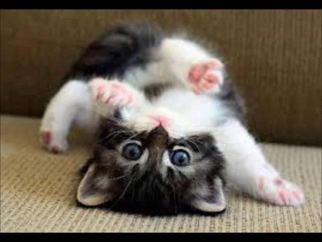 vídeo fofo gatinhos (videos engraçados )