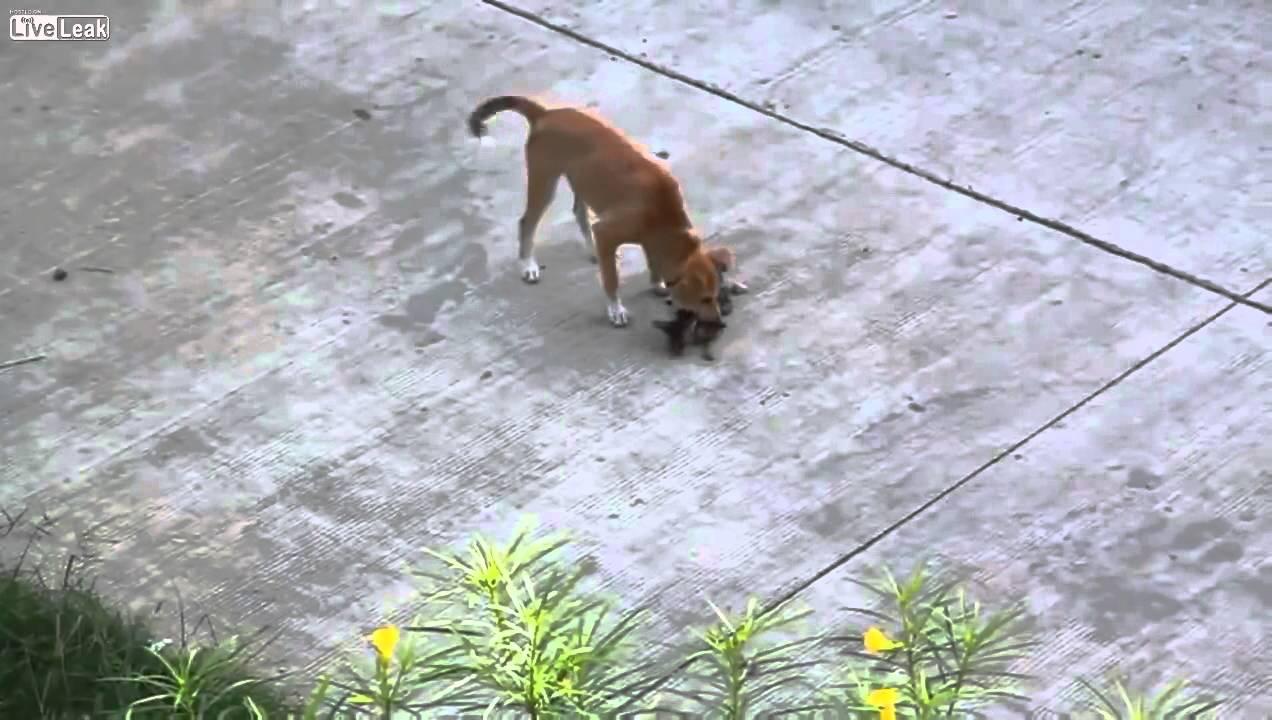 Dog Tries To Kill A Kitten Youtube
