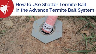 How to Use Shatter Termite Bait in the Advance Termite Bait System