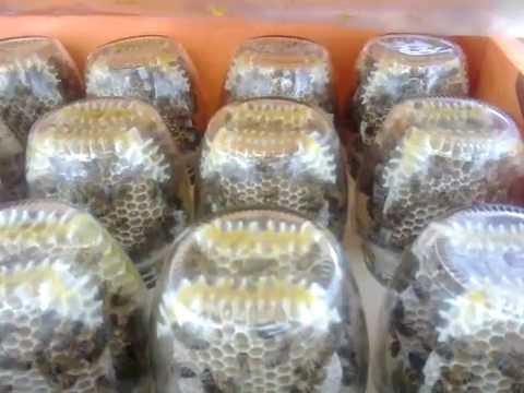 сотовый мёд в рамке для сотового мёда Швалева - YouTube