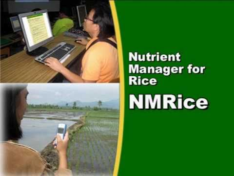 A mobile phone and internet service to help Filipino farmers manage rice crop nutrients