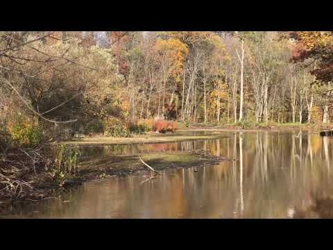 OAK ORCHARD RIVER SALMON FISHING October 28, 2020 TEMP 55 Sunny!