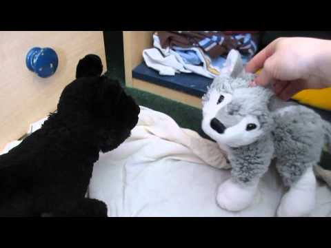 Webkinz Wolf Pack: Episode 3