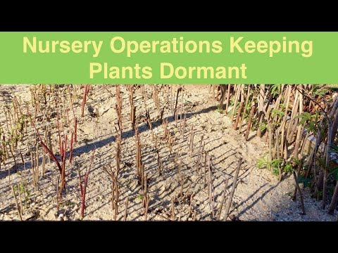 Nursery Operations Keeping Plants Dormant