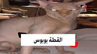 ياسمين عبد العزيز تثير الجدل بقطة من نوع  «إسفينكس»