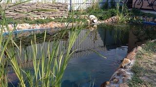 Сделать простой искусственный пруд, водоем на участке, строительство, опыт 2 года