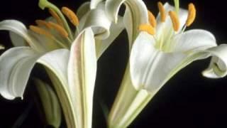 Το λουλουδάκι του μπαξέ-Νησιώτικα τραγούδια