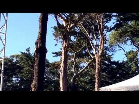"Steve Earle ""L.A. Freeway"" Song By Guy Clark (San Francisco, 30 September 2016)"