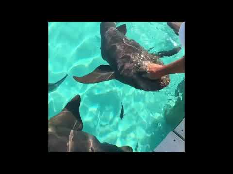 Brave Woman Pets Sharks
