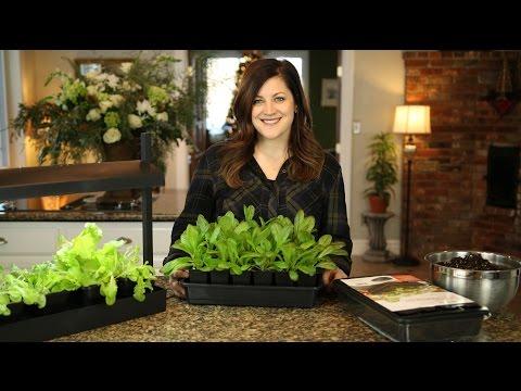 Self Watering Seed Starter Kit // Garden Answer