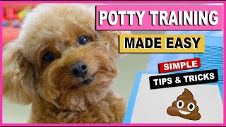 HOW TO POTTY TRAIN YOUR DOG QUICKLY TRAINING MY TOY POODLES |THE POODLE MOM