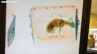 Heart of Heathrow: Animal Reception Centre