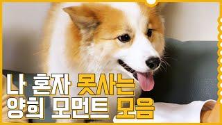 방성훈밖에 모르는 세젤귀 양희ㅣSunghoon's puppy Yanghee