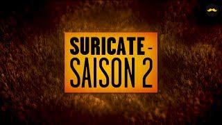 SURICATE - Saison 2