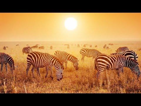 TANZANIA & ZANZIBAR 2016 / Hannah Gratzer