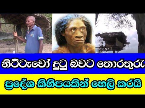 Nittaewo ,නිට්ටාවෝ Sri Lanka  News