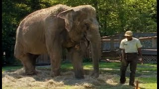 Solomon Was Shirley's Keeper For 22 Years. So When It Was Time to Set Her Free? You'll Cry!