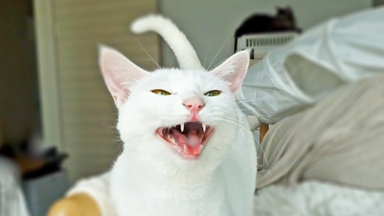 토오끼는 화가 많다...말은 더많다!!!