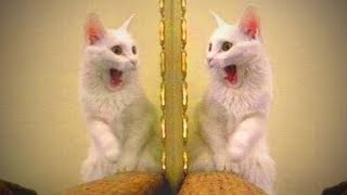 Cats Vs. Mirrors 😻 😆 Funny Cats Reaction to Mirrors (Full) [Funny Pets]