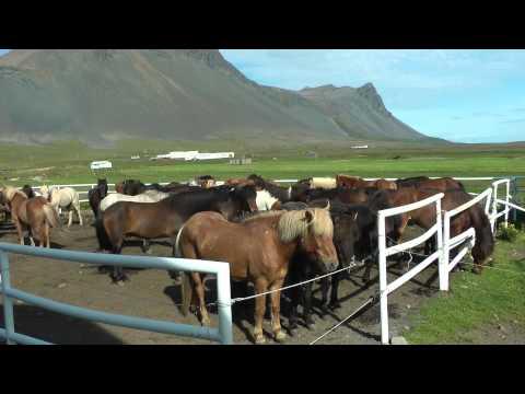 Snæfellsnes- Island im Kleinen