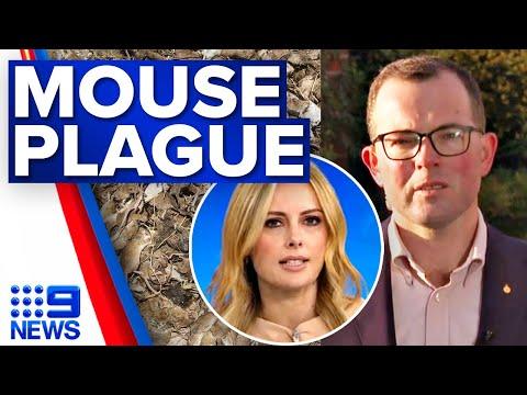 $50 million to fight NSW mouse plague   9 News Australia