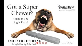 Review: Indestructibone Dog Toy from Bulletproof Pet Products
