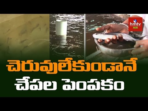 RAS Fish Farming System | Software Success Story In Fish Farming | Hmtv Agri