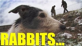 Fieldsports Britain - Rabbiting With Ferrets And Lurchers, Foxshooting And Gundogs (episode 170)
