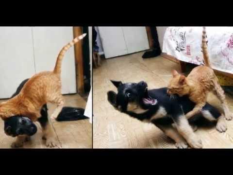 Самые смешные котята. Картинки. Фото. Видео