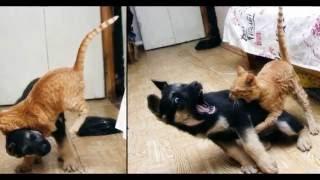 самые смешные фото котов и собак