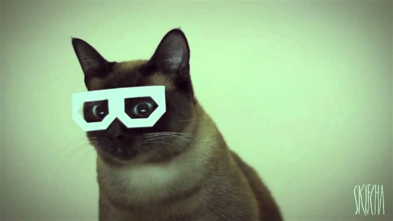 Dubstep Cat...EXPLODING!!!!! - YouTube