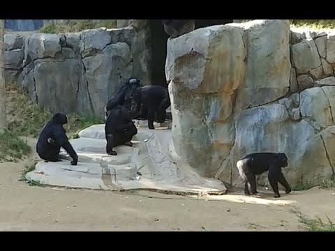 Ape Spiel