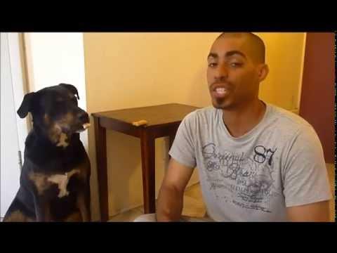 Useless Dog Trick: Trust