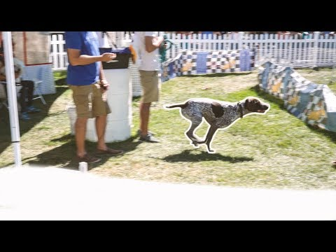 Dog Agility Course With German Shorthaired Pointer | Pet Adoption Fair