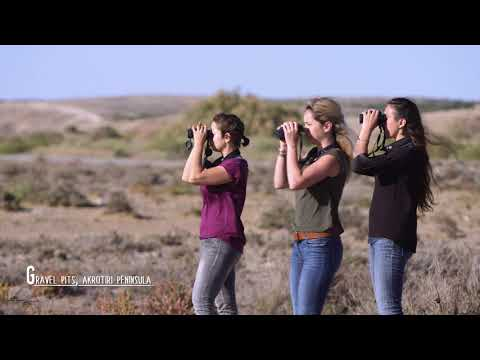 Birdwatching in Cyprus, Spring