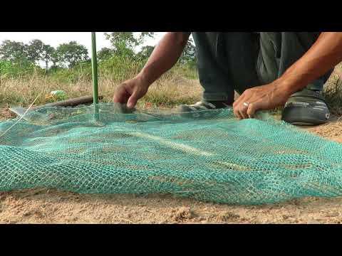 Amazing Creative Guinea Chicken Trap - Attractive Guinea Chicken Trap Using Nets