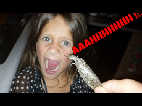 Kids Reaction to a Ugly Mean Scary Looking Bug!!!.The Dobsonfly and Yes they Bite!!!