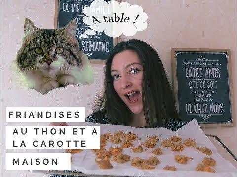 DIY - FRIANDISES MAISON POUR CHAT !