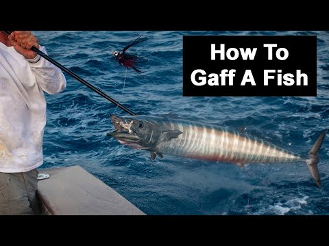 How To Gaff A Fish: Mistakes, Choosing The Right Size Gaff, & More