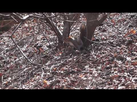 College bukkake free video streaming