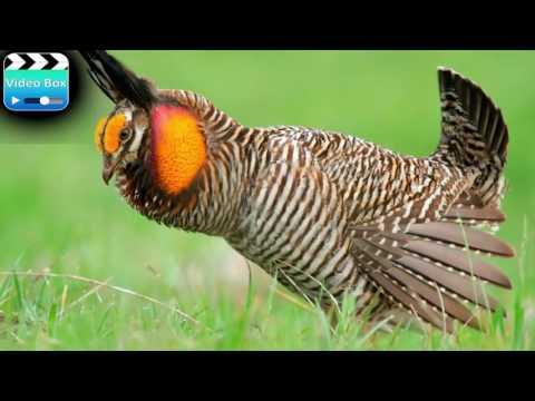 Dünyanın En Nadir Kuş Türleri